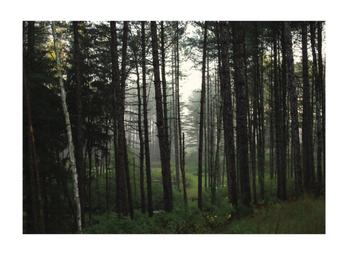 Kingdom Trees