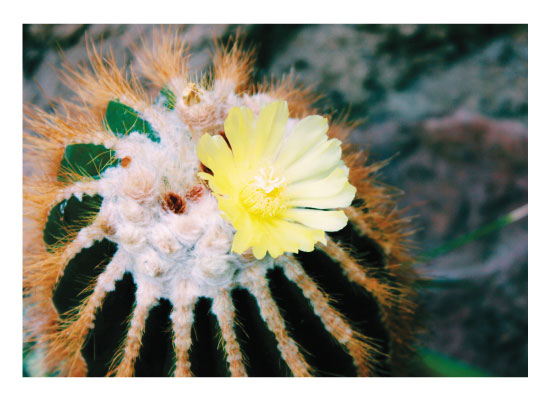 art prints - The National Cactus by Madison McCormick
