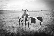 Horse and Pony by Jacie Morgan