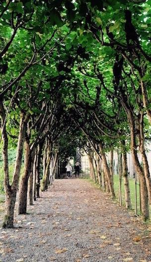 art prints - Row of Trees by Aristotle Saliva-Sclank