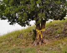 Yellow Ribbon by Jacie Morgan