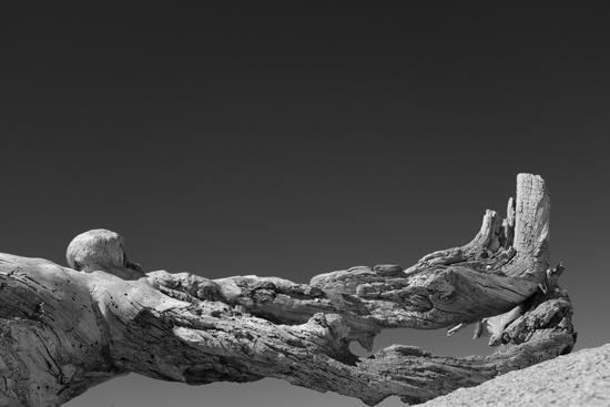 art prints - Driftwood Sentinel by Alex Garris