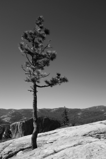 art prints - Sentinel Falls Pine by Alex Garris