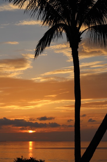art prints - Sunset through the Palms by Claire Duda