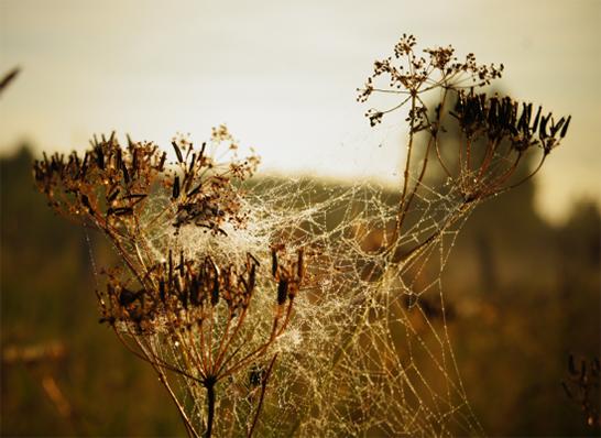 art prints - Golden meadow by Olga Davydova