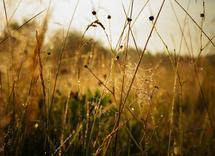 Sunrise on the meadow by Olga Davydova