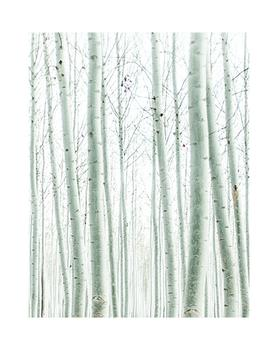 Quiet Poplars
