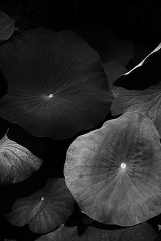 Water Plants in Black and White