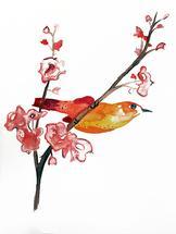 Cherry Blossom by Jessie Baude