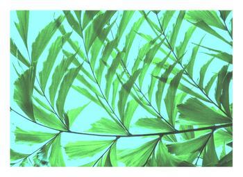 Mod Fishtail Palm No.2