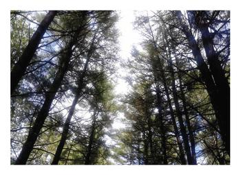 Forest Wonderer