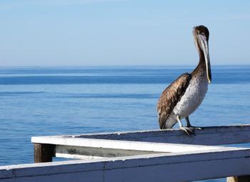 California Boardwalk