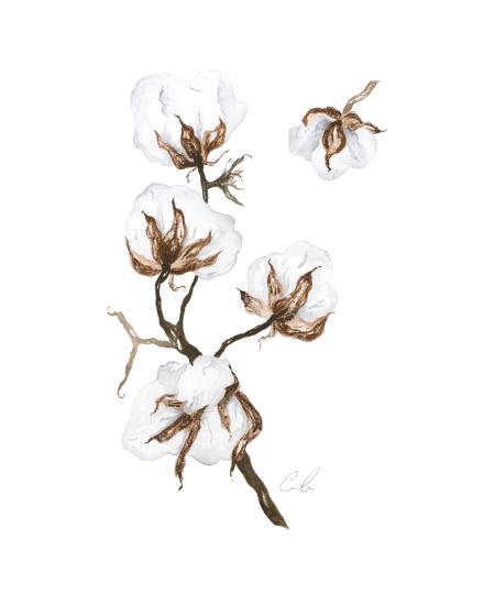 art prints - Cotton by Cara Rosalie Olsen