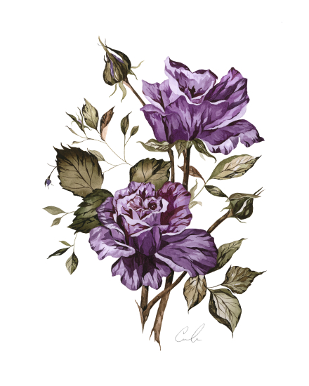 art prints - Vintage Purple Roses by Cara Rosalie Olsen