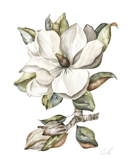 art prints - Magnolia by Cara Rosalie Olsen