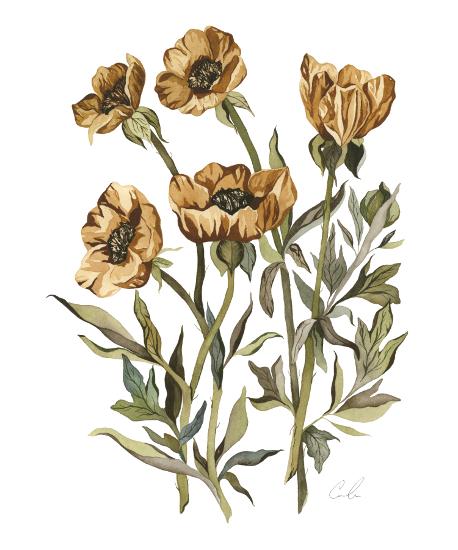 art prints - Yellow Poppies by Cara Rosalie Olsen