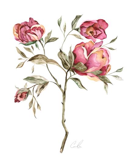art prints - Vintage Roses by Cara Rosalie Olsen