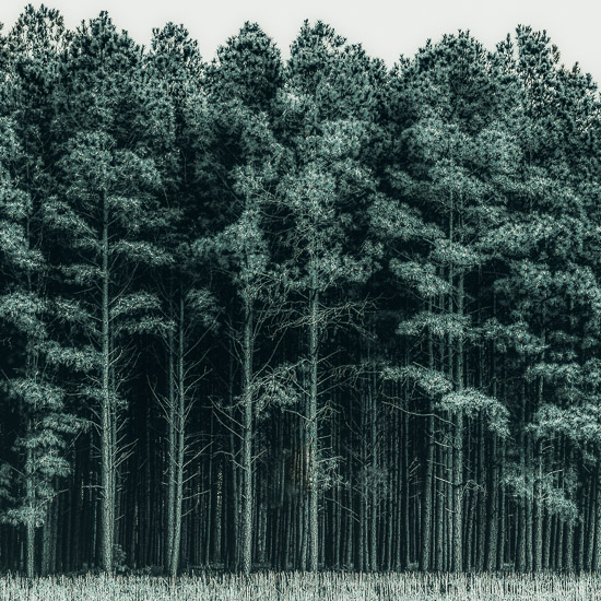 art prints - through the trees by Keely Norton Owendoff