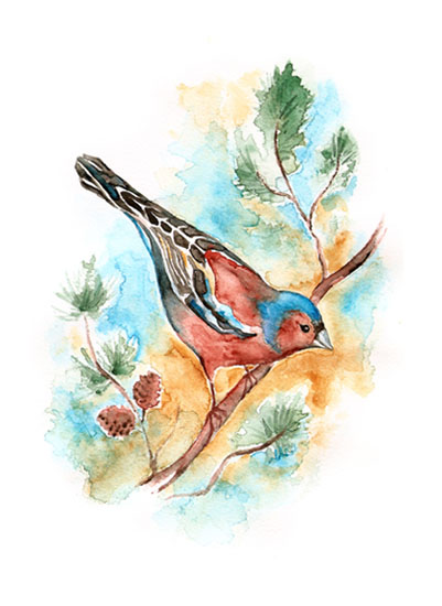 art prints - Collecting Birds Chaffinch by Eva Marion
