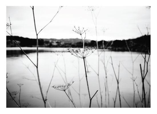 art prints - Winter Lake by Mel P