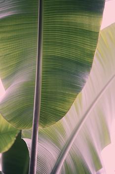 Tropic