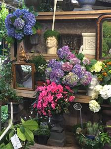 Flower Market- Paris II