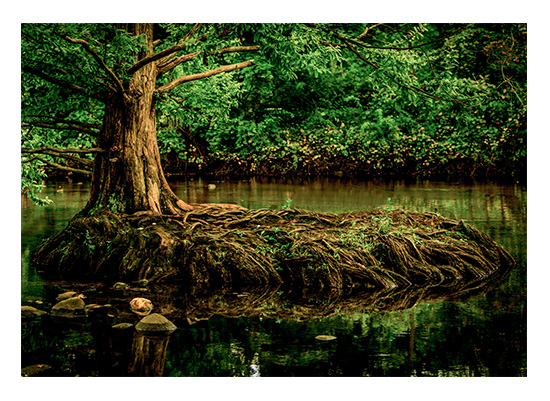 art prints - Twisted Root by Christopher Deau