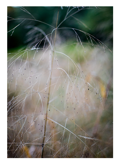 art prints - Abstract Grass 3 by Christopher Deau