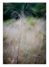 Abstract Grass 3 by Christopher Deau