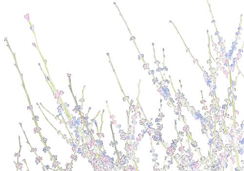 art prints - Soft 3 by Pamela Viola