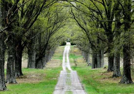 art prints - The Path Ahead by LWCallison