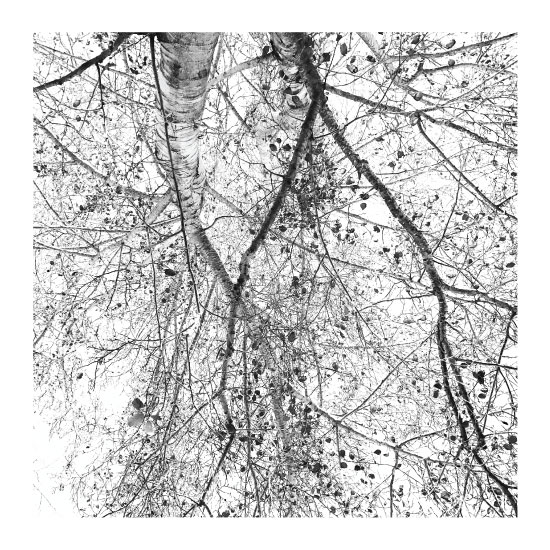 art prints - Branches by Pelin Hepcilingirler
