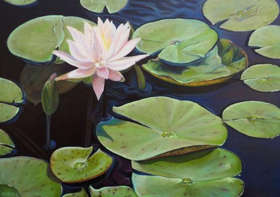 art prints - Waterliles by Laura Dick
