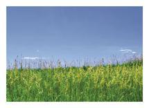 Summer Field in Colorad... by Amy Stevenson Wilson