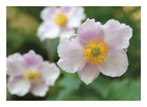 Pink Flowers in Golden by Amy Stevenson Wilson