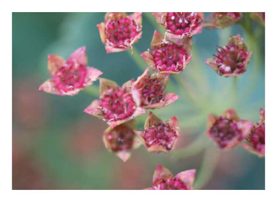 art prints - End of the summer pink florals by Amanda Zoss