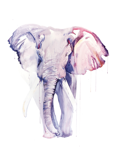 art prints - Elephant by Isobel James