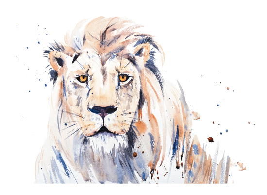 art prints - Lion's Gaze by Isobel James