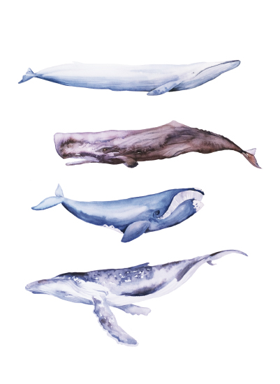 art prints - Whales by Isobel James