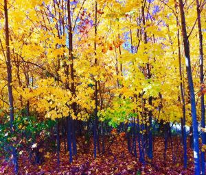 art prints - Yellow Park by Karin Franchi