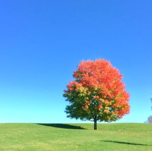 art prints - Fall...ing for your colors by Karin Franchi