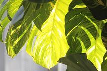 Shade leaves by Juliano Lamb