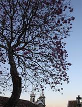 Tree and church by Juliano Lamb