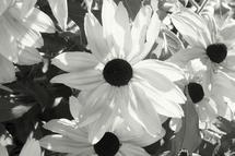 """""""Sunlight"""" by Debra Stevenson"""