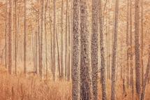 Cypress Giants by Jessica Santos