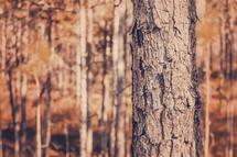 Cypress Bark by Jessica Santos