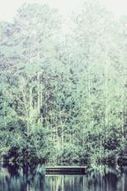 Blue Cypress by Jessica Santos
