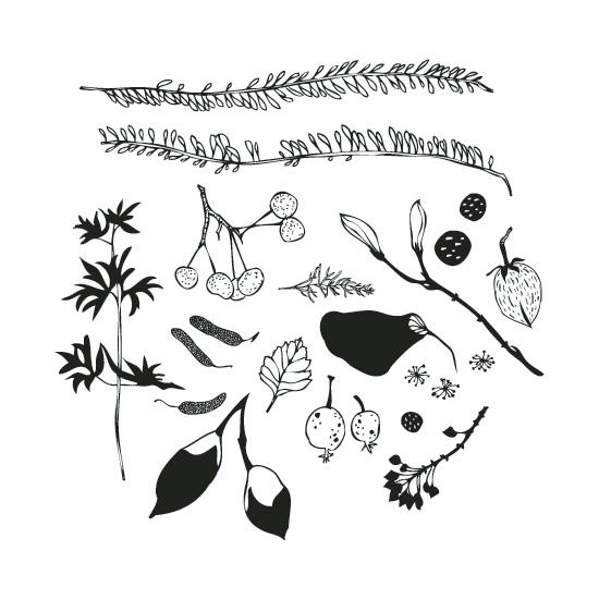 art prints - Flora by Laurie Baars