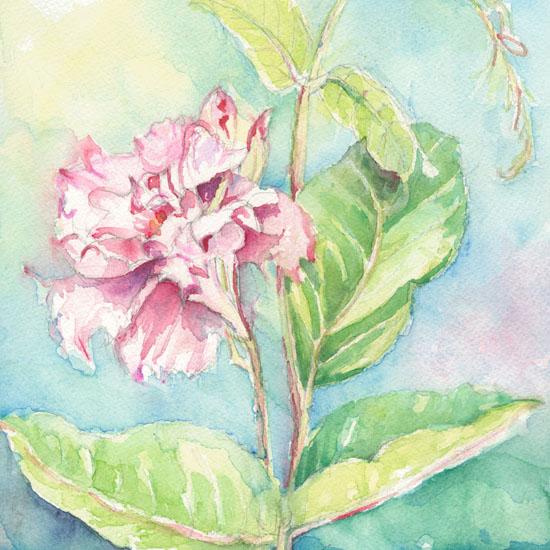 art prints - Tropical Delight by Debra Stevenson