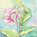 Tropical Delight by Debra Stevenson